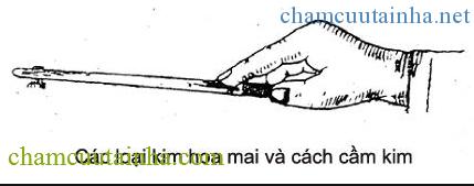 maihoacham