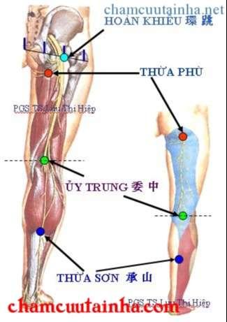 xác định vùng đùi và cẳng chân