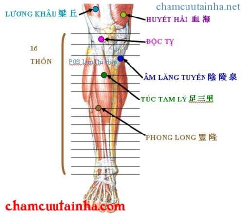 cách xác định chính xác huyệt vùng chân