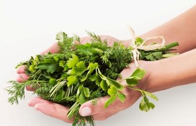 Sử dụng thảo dược thiên nhiên tốt cho người bị bệnh chàm