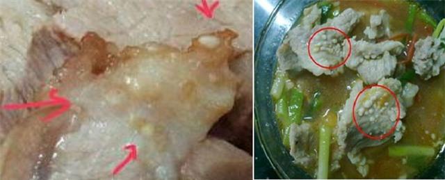 Hình ảnh ấu trùng sán gạo heo trong thực phẩm