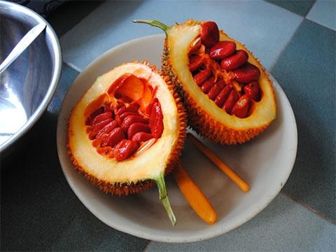 Trong lớp màng đỏ bao quanh hạt gấc chứa rất nhiều vitamin E chống oxy hóa. Ảnh minh họa.