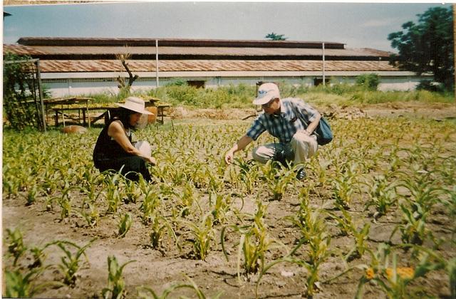 TSKH. Trần Công Khánh và TS. Nguyễn Thị Ngọc Trâm tại vùng trồng Trinh nữ hoàng cung năm 1998